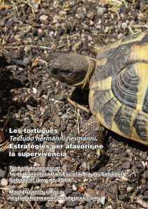 Treball recerca de Martí Graells sobre les tortugues mediterrànies THH